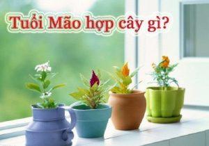 Tuổi Đinh Mão nên trồng cây gì cho hợp phong thủy?